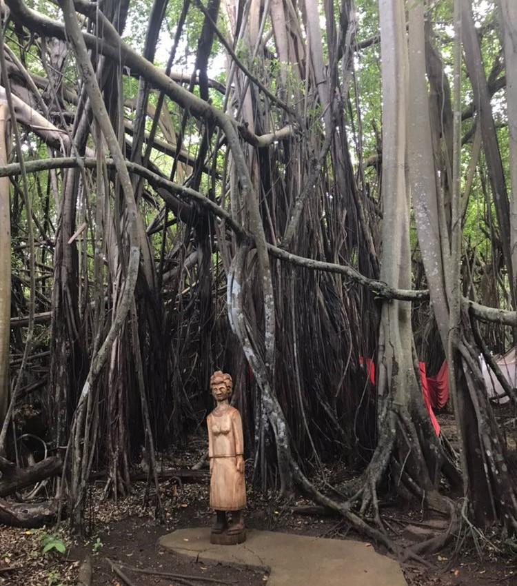 albero sacro madagascar